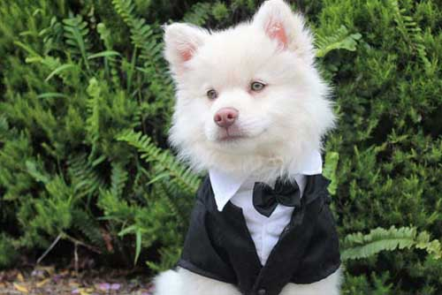 10 Adorable Ways to Include Your Pet in Your Wedding